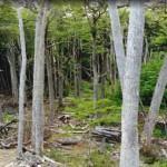 El centro de investigación forestal tendrá una delegación en la provincia