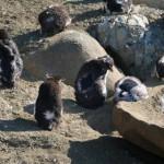 """""""La gente puede ir a ver a los pingüinos pero es importante que los respeten, ya que se trata de seres vivos"""""""