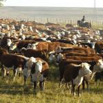 """""""En los últimos diez años se perdieron 12 millones de cabezas de bovinos"""""""