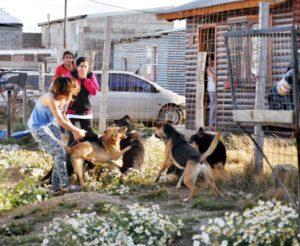 Los perros asilvestrados continúan afectando a toda la sociedad fueguina.