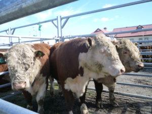 El Ministerio de Agricultura rubricó un importante convenio con la Asociación Rural.