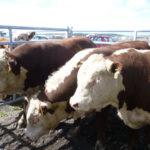 Primer Centro de reproducción y genética en la Patagonia