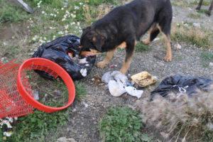 La problemática de los perros sueltos es uno de los focos del estudio.