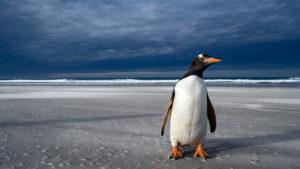 Más de la mitad de los pingüinos del mundo están en peligro de extinción