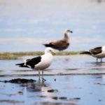 El miércoles inicia el 7º Festival de Aves de la Reserva Costa Atlántica