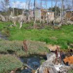 La situación ambiental en Tolhuin es delicada