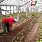Impulsan un polo productivo frutihortícola en Tolhuin