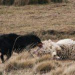 Promulgan Ley sobre perros asilvestrados y tenencia responsable