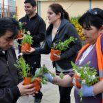 Hoy se realiza la tradicional entrega gratuita de plantines