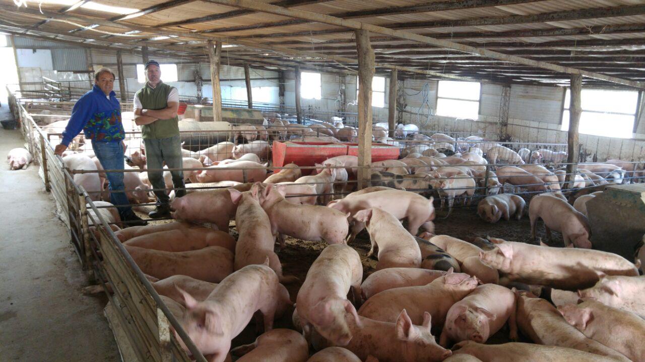 Los alimentos para criar los cerdos son traídos desde Buenos Aires, desde Trenque Lauquen con base a cereales, lo que es Biofarma para los lechones los producen en Córdoba.