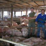 Dos productores apuestan a la producción de carne de cerdo de calidad