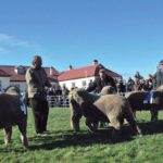 Mañana comienza la XXXVIII Exposición y Feria Ganadera organizada por la Asociación Rural