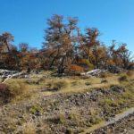 Impiden desarrollos inmobiliarios en bosques afectados por incendios