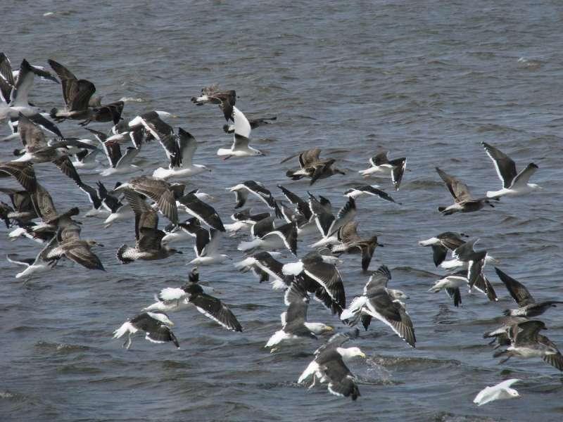 La costa atlántica de Río Grande está incluida como Sitio Ramsar elegida por la Convención Relativa a los Humedales de Importancia Internacional especialmente como Hábitat de Aves Acuáticas.