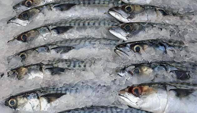El proyecto mejorará la calidad de los productos de mar, potenciando la competitividad del sector gastronómico.