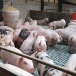 Castiglione anunció que a fines de septiembre se inaugura la sala de faena de porcinos