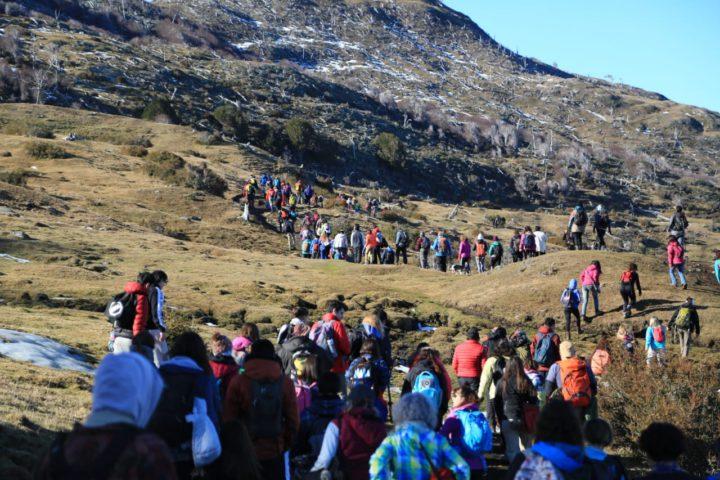 Más de 350 personas abrazaron simbólicamente un árbol para proteger el bosque nativo.