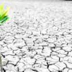 """Café con Ciencia: """"Reforestar para frenar el cambio climático… ¿es suficiente?"""""""
