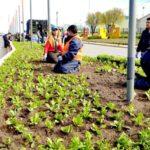 Comenzó la colocación de plantines en distintos puntos de la ciudad