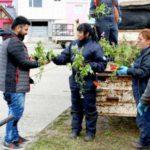 El municipio de Río Grande entregará plantines a los vecinos hoy y mañana