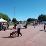 'Zoonosis más cerca' llega al barrio Dos Banderas