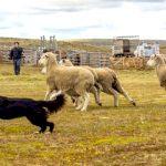 Se suspendió la Fiesta del Ovejero en Estancia El Roble