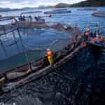 Villegas valoró que se sumen más voces en la lucha contra la salmonicultura