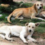 Preocupación por masivo envenenamiento de perros