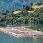Kulfas consideró como «una decisión equivocada» la de prohibir la cría de salmones en Tierra del Fuego