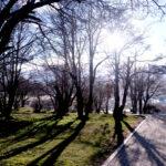 Impulsan la protección del ambiente boscoso de la ciudad de Ushuaia